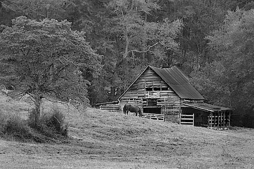 Horse Barn by Lisa Bell