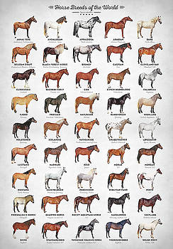 Horse Breeds of the World by Zapista Zapista