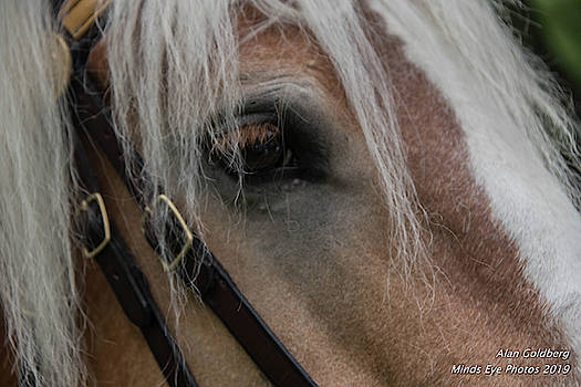 Horse close up by Alan Goldberg