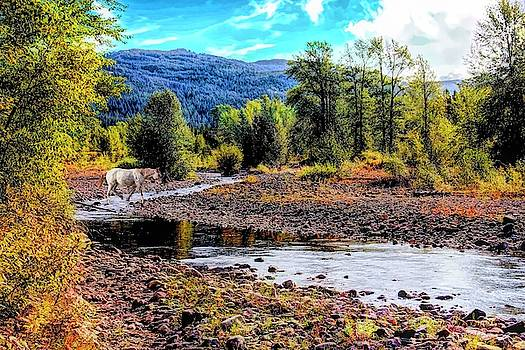 Horse crossing Bear Creek,Bear Creek Guest Ranch,Essex Montana by Rusty R Smith