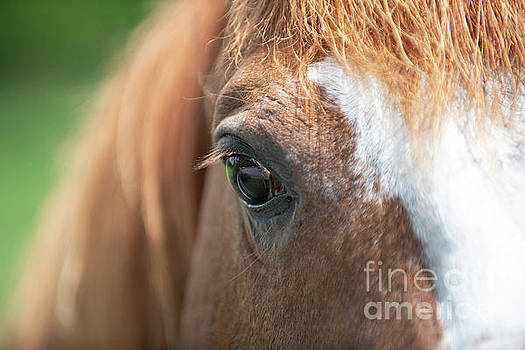 Dale Powell - Horse Eye