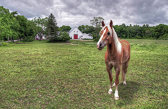 Horse in Pasture by Wayne Marshall Chase