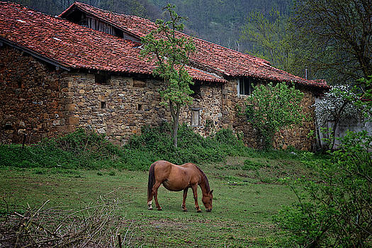 Horse in the field next to a rural house by Vicen Photography