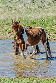 Horses Enjoying the Water Hole by Barbara Hayton