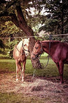 Horses Grazing by Karen Varnas