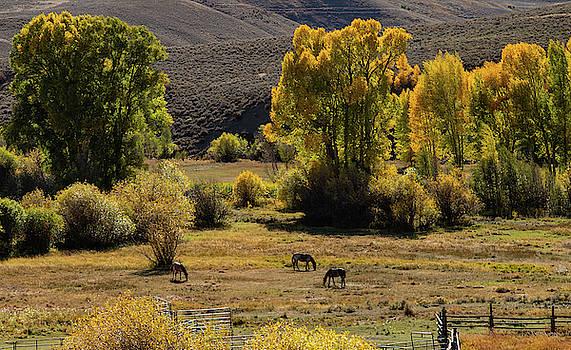Horses in Autumn by Jim Allsopp