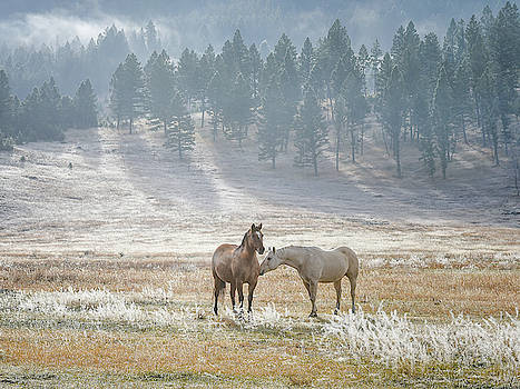 Horses on a Montana Ranch by Keith Boone