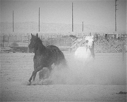 Horses Play in the Dust in Black and White  by Deborah Kinisky