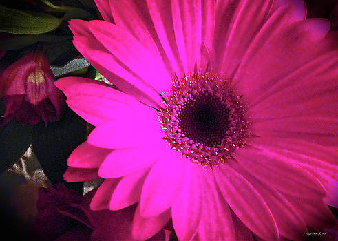 Hot Pink Dahlia Flower by Connie Fox