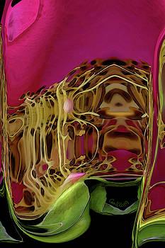 Hot Pink Rose by Carel Schmidlkofer