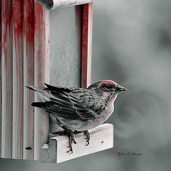 House Finch on Feeder by Kae Cheatham