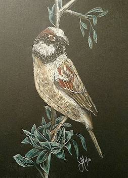 House Sparrow by Joan Mansson