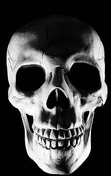 Human Skull by Lonnie Paulson