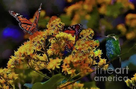 Hummingbird And Monarch by John Kolenberg