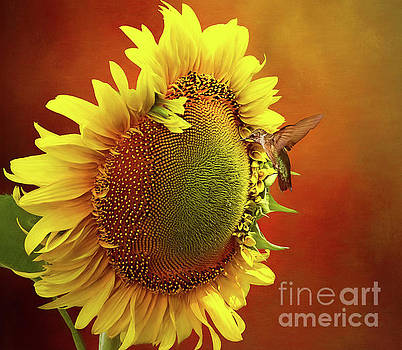 Hummingbird on a Sunflower by Warrena J Barnerd