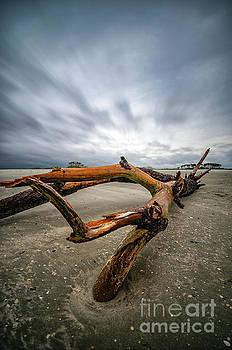 Hurricane Florence Beach Log - portrait by David Smith