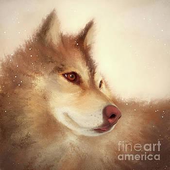 Husky Dog by Anne Vis