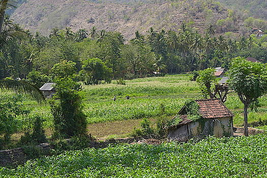 Hut in the rice fields, Bali by Inessa Williams