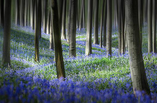 Hyacinth dream by Rob Visser