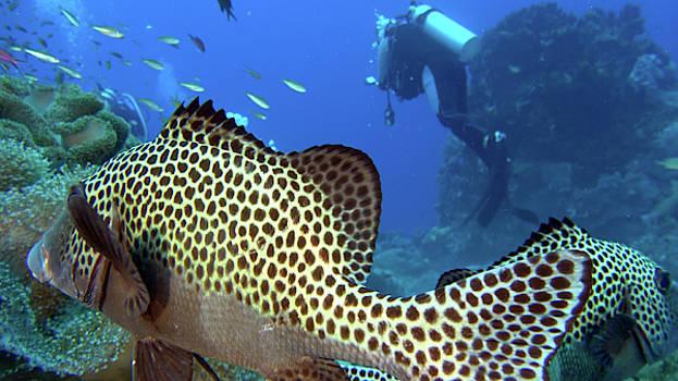 I am a beautiful sweetlip fish by Paul Ranky