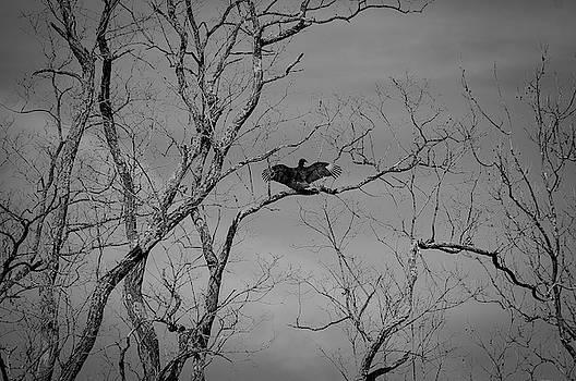 I Got Wings by Andrea Swiedler