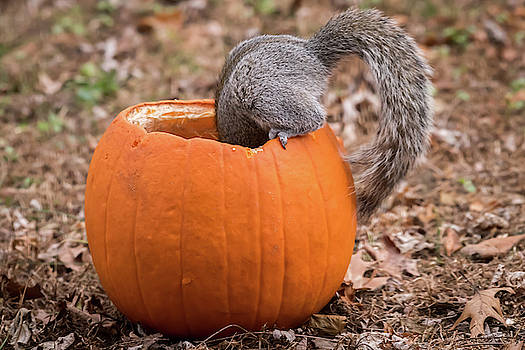 I know It's In Here Somewhere Squirrel  by Terry DeLuco