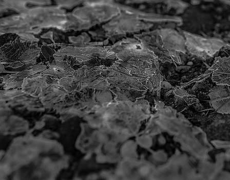 Ice layer broken over little plants by Kai Mueller