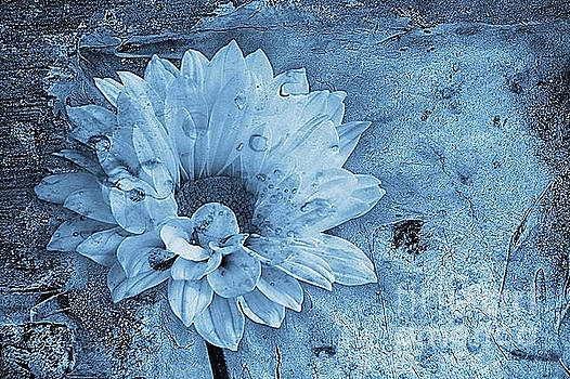 Iced by John Edwards