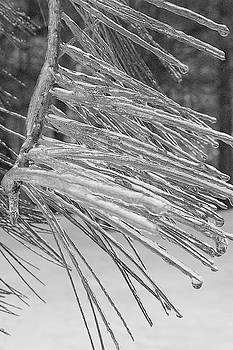 Iced Needles by Andrea Swiedler