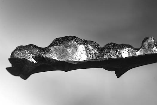 Iced Twig by Tim Beebe