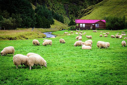 Icelandic Sheep Ranch by John Wilkinson