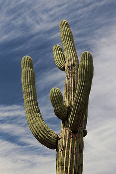 Iconic Saguaro Cactus by David T Wilkinson
