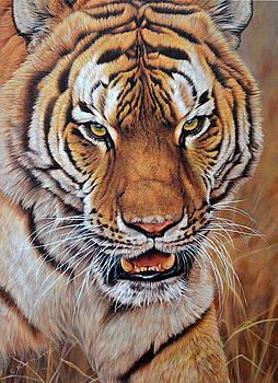 I'm No Kitten - Tiger by Alan M Hunt