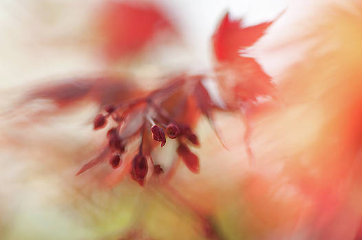 Jenny Rainbow - Imperfect Perfection. Red Maple Leaves Abstract 14