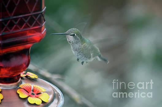 In Flight by Carol Eliassen