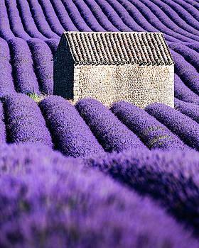 Francesco Riccardo Iacomino - In Purple
