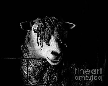 In the Barn  by Alana Ranney
