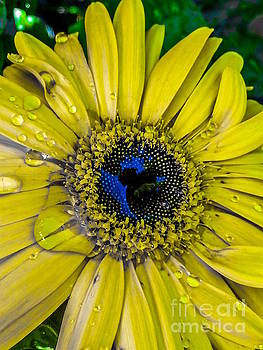 In the Eye of the Flower by Sherry Little Fawn Schuessler