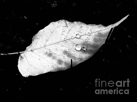 In The Rainy Darkness by Debra Lynch