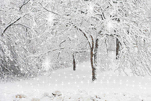 Incandescent and Florescent Winter by Cindy Boyd