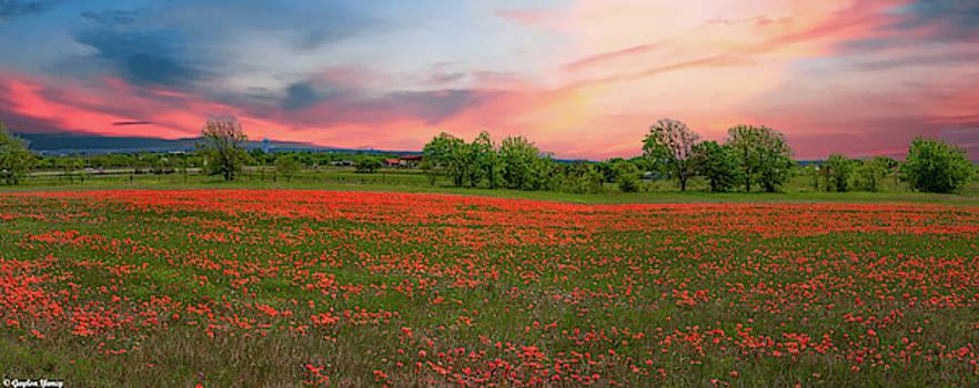 Indian Paintbrush Field by Gaylon Yancy