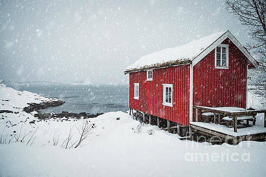 Infinite Winter by Evelina Kremsdorf