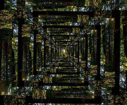Pelo Blanco Photo - Infinity Tunnel Forest Sunburst