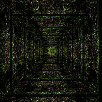 Pelo Blanco Photo - Infinity Tunnel Wooded Trail Reflection