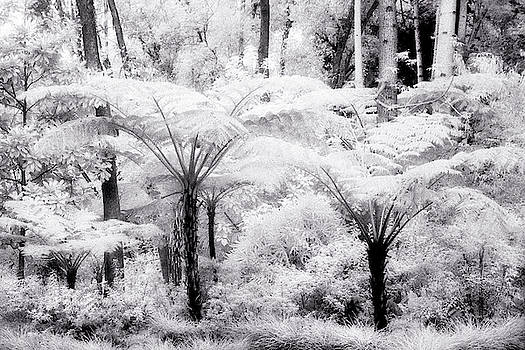 Infrared Cycads by Fred Hood
