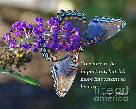 Cindy Treger - Inspiration - Red-spotted Purple