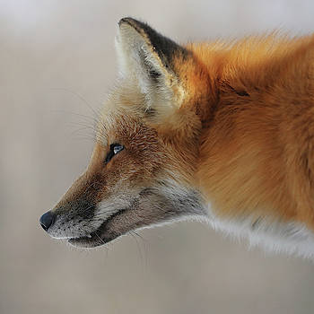 Intense Stare by Doris Potter