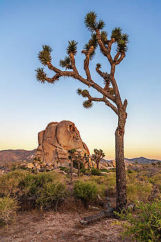 Intersection Rock and Joshua Tree by Peter Tellone