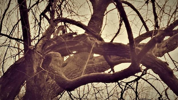 Intertwined Hickory Tree Branches by Peggy Leyva Conley