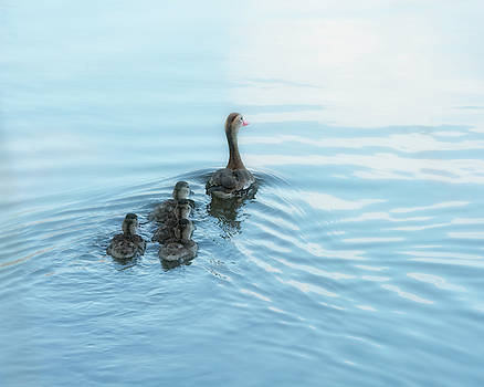 Into the Future - Black-Bellied Whistling Duck Family by Mitch Spence